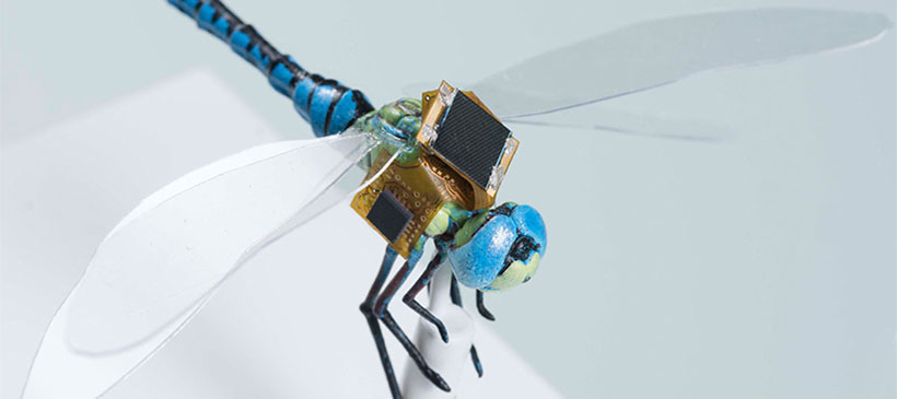 Dragonflies: real life drones
