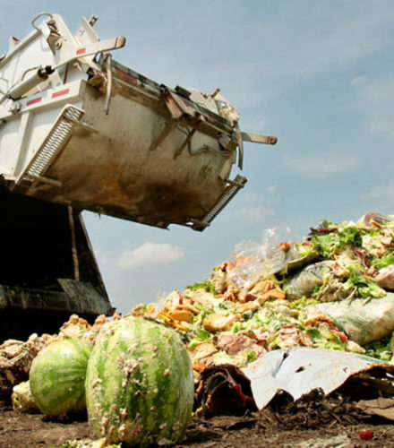 Food: What a Waste, What a Shame!….